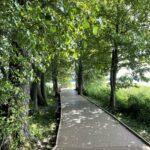 Veisiejų miesto parko pėsčiųjų – dviračių lentinio takas